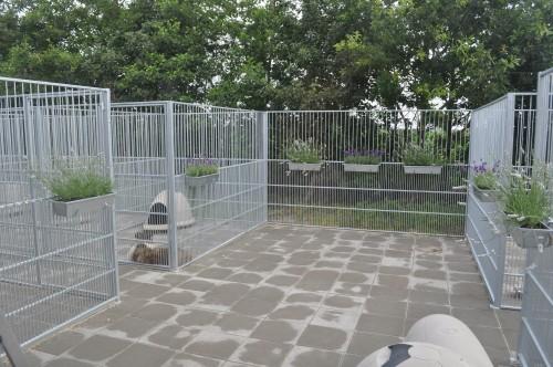 ALT i Flintbjerg Hundepension er etableret efter nyeste viden og lovgrundlag omkring hundepleje.